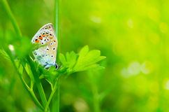Small butterfly in the grass. Small bright butterfly  in the green grass Stock Photography