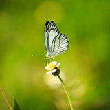 Small butterfly. On the grass flower Stock Image
