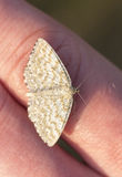 Small butterfly on hand Stock Images
