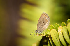 The small butterfly Royalty Free Stock Image