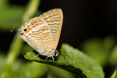The small butterfly Royalty Free Stock Images