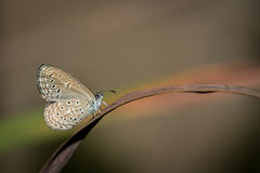 The small butterfly Royalty Free Stock Photo