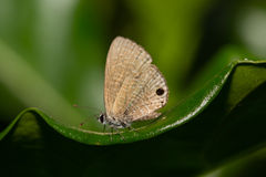 Small butterfly. Stock Photos