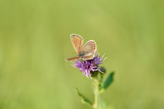 Small butterfly resting on the flower Stock Images