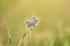 Small butterfly resting on the flower Stock Photography