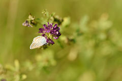 Small butterfly resting on the flower Stock Photo