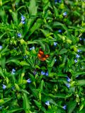 A small butterfly