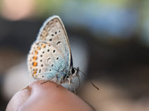 Small butterfly sits on a finger Stock Photos