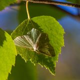 A small butterfly sitting on a swamp plants. Natural scenery of butterfly in natural habitat Stock Image