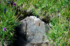 Small butterfly in the stone Royalty Free Stock Photo