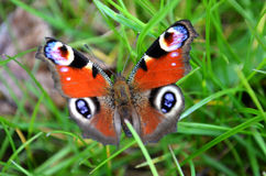 Small butterfly Stock Photos