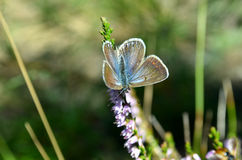Small butterfly Royalty Free Stock Photography