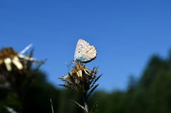 Small butterfly Stock Photography