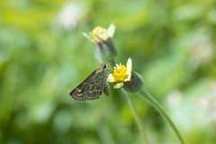 Small butterfly swarming on grass flower.