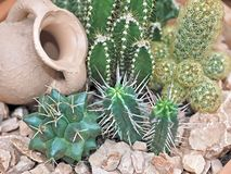 Macro of small cacti with an oil can royalty free stock photo