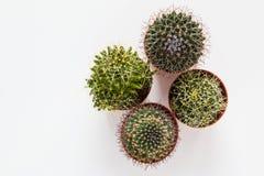 Small cacti on white table, top view Stock Photos