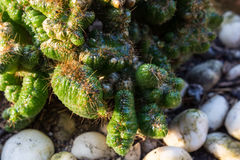 Small cactus close up. With contrast of light Royalty Free Stock Photo