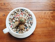 Small cactus and colorful stones in the coffee cup. stock image