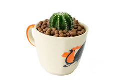 Small cactus in a cup of chicken pattern Stock Photos