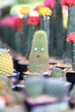 Small cactus is decorated. Royalty Free Stock Photography
