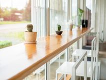 Small cactus decoration in cafe royalty free stock photos