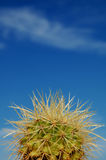 Small cactus detail. Detail of a golden barrel cactus with sky on background royalty free stock photo