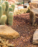Small cactus and flower blooming in the garden. Beautiful small cactus and flower blooming in the garden stock photo