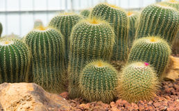 Small cactus and flower blooming in the garden. Beautiful small cactus and flower blooming in the garden stock image