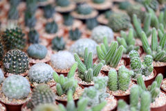 Small cactus. Stock Photos
