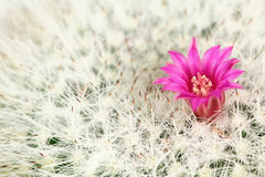 Small cactus flower Stock Image