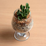 Small cactus in glass on wooden table. Stock Image
