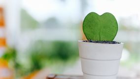 Small cactus with heart shape royalty free stock photo
