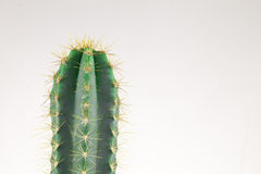 Small cactus in metal can Royalty Free Stock Images