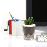 Small cactus on office deak. Stock Photography