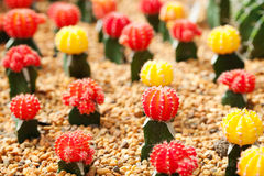 Small cactus plant Stock Image