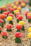 Small cactus plant Stock Photos