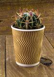 Small cactus plant in a  paper coffee cup Royalty Free Stock Image