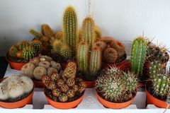 Small Cactus Plants Stock Photos