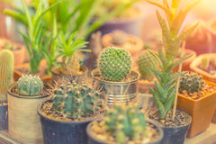 Small cactus pot corner garden in home. Royalty Free Stock Images