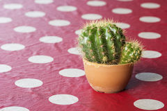 Small cactus in a pot on red tablecloth Royalty Free Stock Images