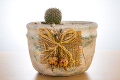 Small cactus in pot. On white background Royalty Free Stock Photography