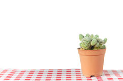 Small cactus in a pot on white background Stock Image
