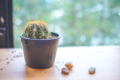 Small Cactus in a pot by the window. stock image