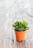 Small cactus in pot Stock Photo