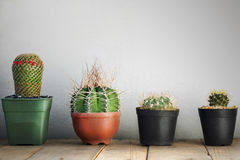 Small cactus in a pot Stock Image