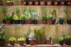 Small cactus in pots Stock Images