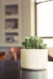 Small cactus in a room Royalty Free Stock Images