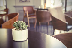 Small cactus in a room Royalty Free Stock Photos