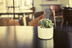 Small cactus in a room Stock Images