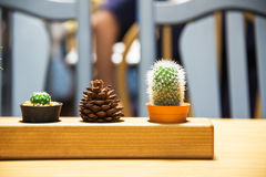 Small cactus in vintage place . Stock Images